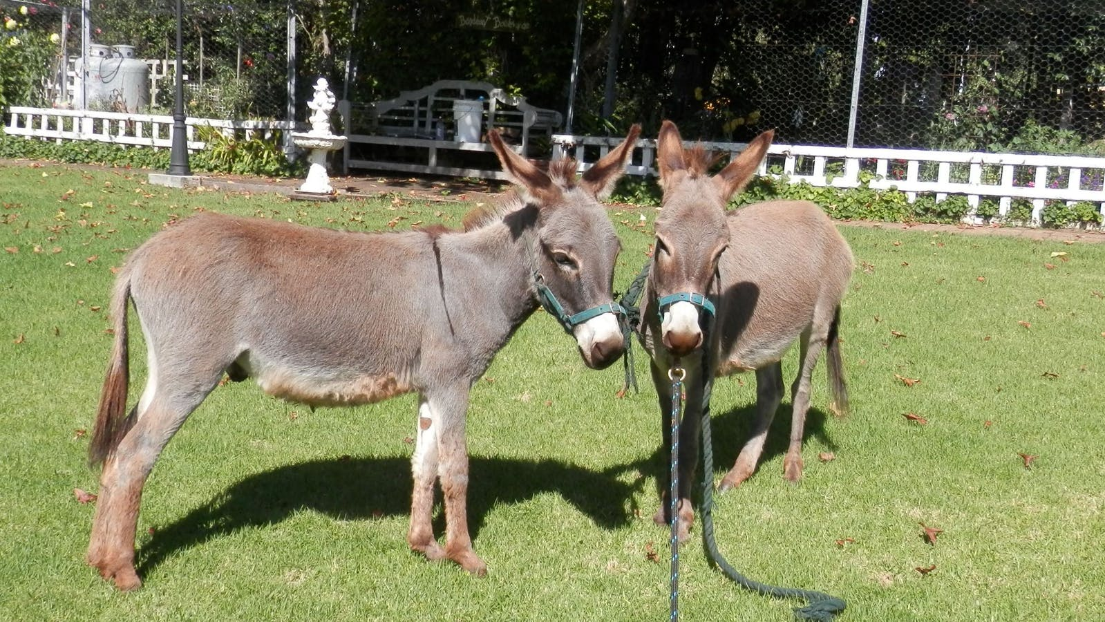 Mystery Mountain Donkeys