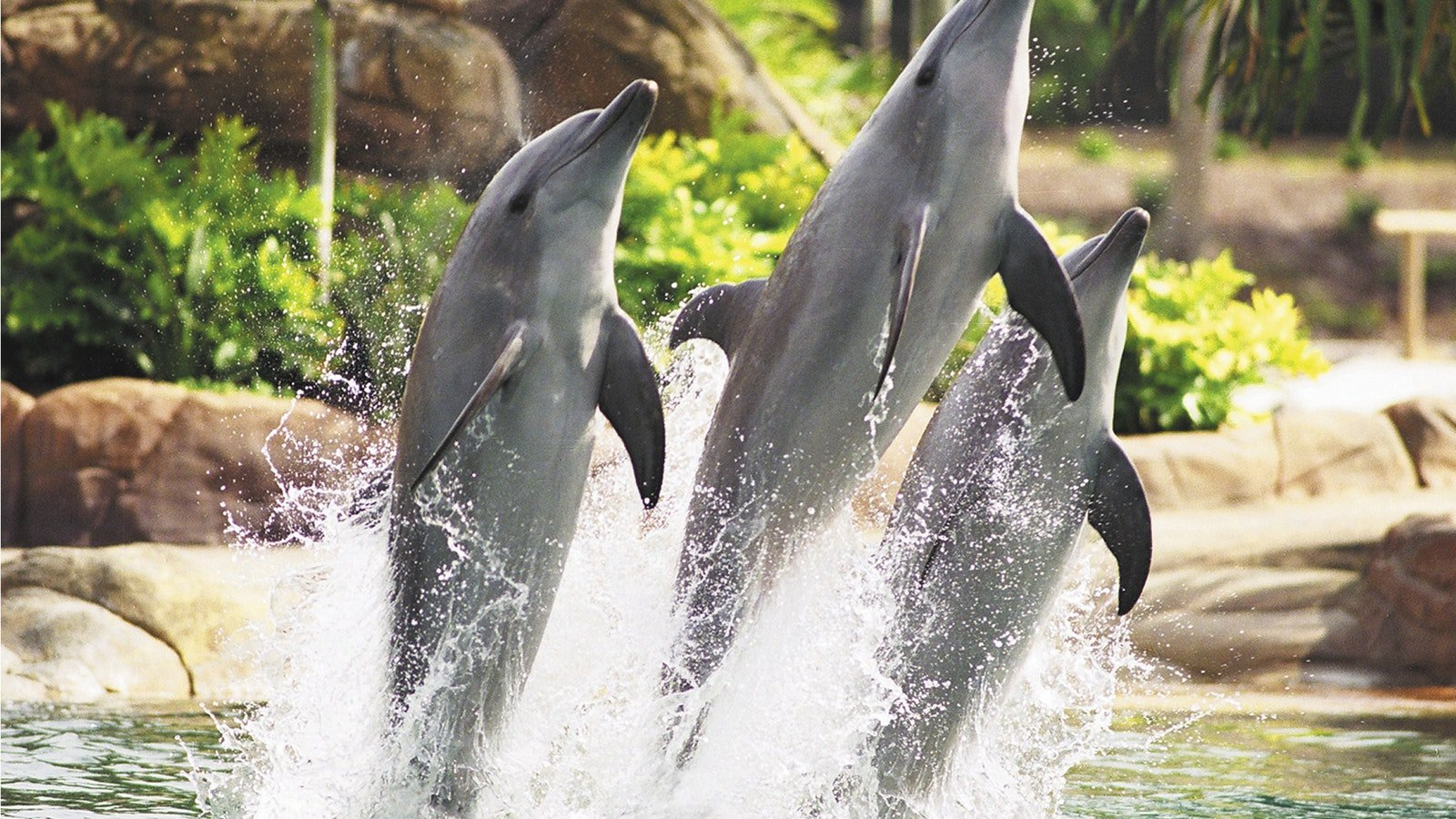 Dolphin Discovery at Sea World Resort