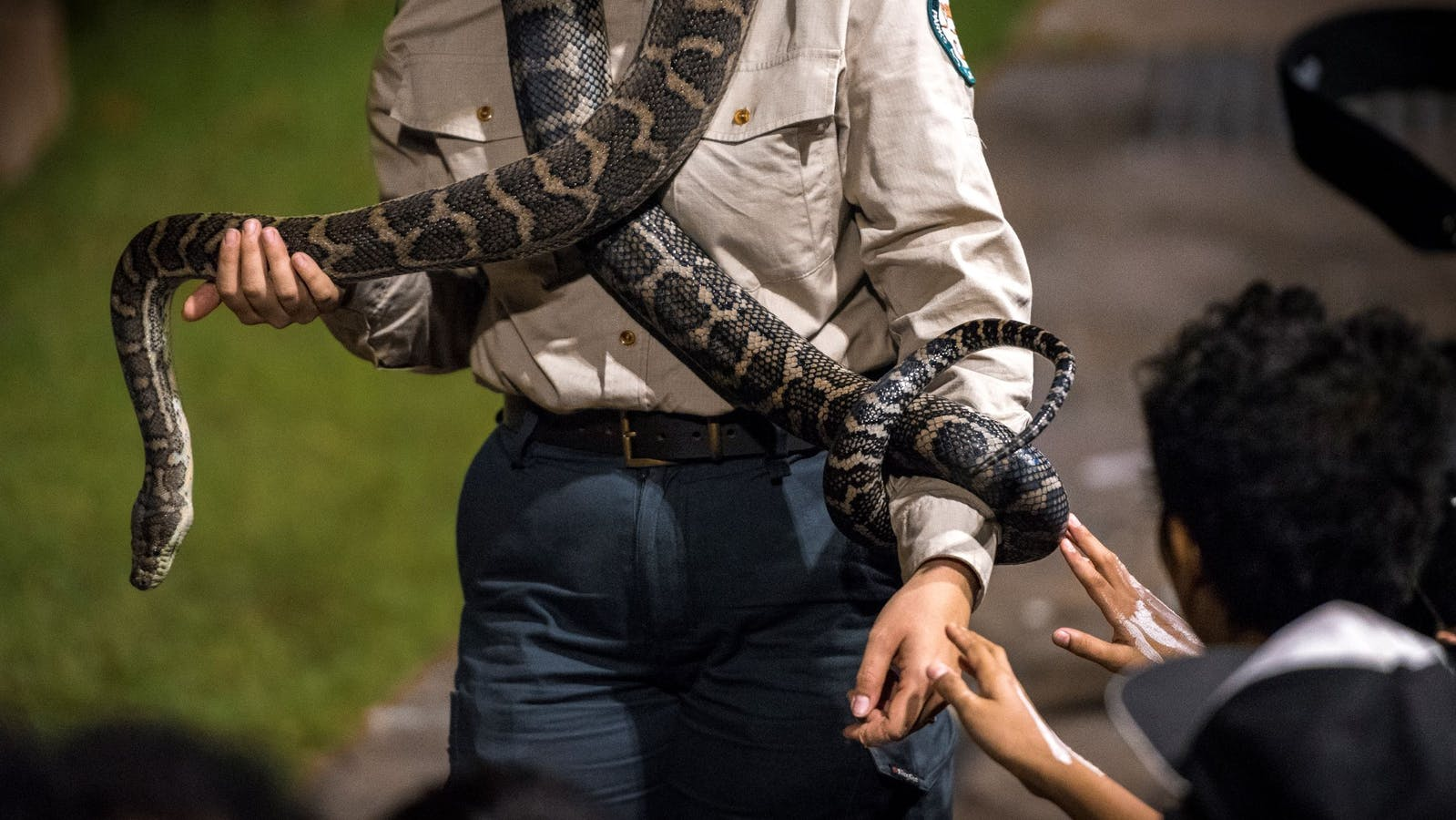A Park Ranger is holding a python across both his arms and is showing it to the audience.