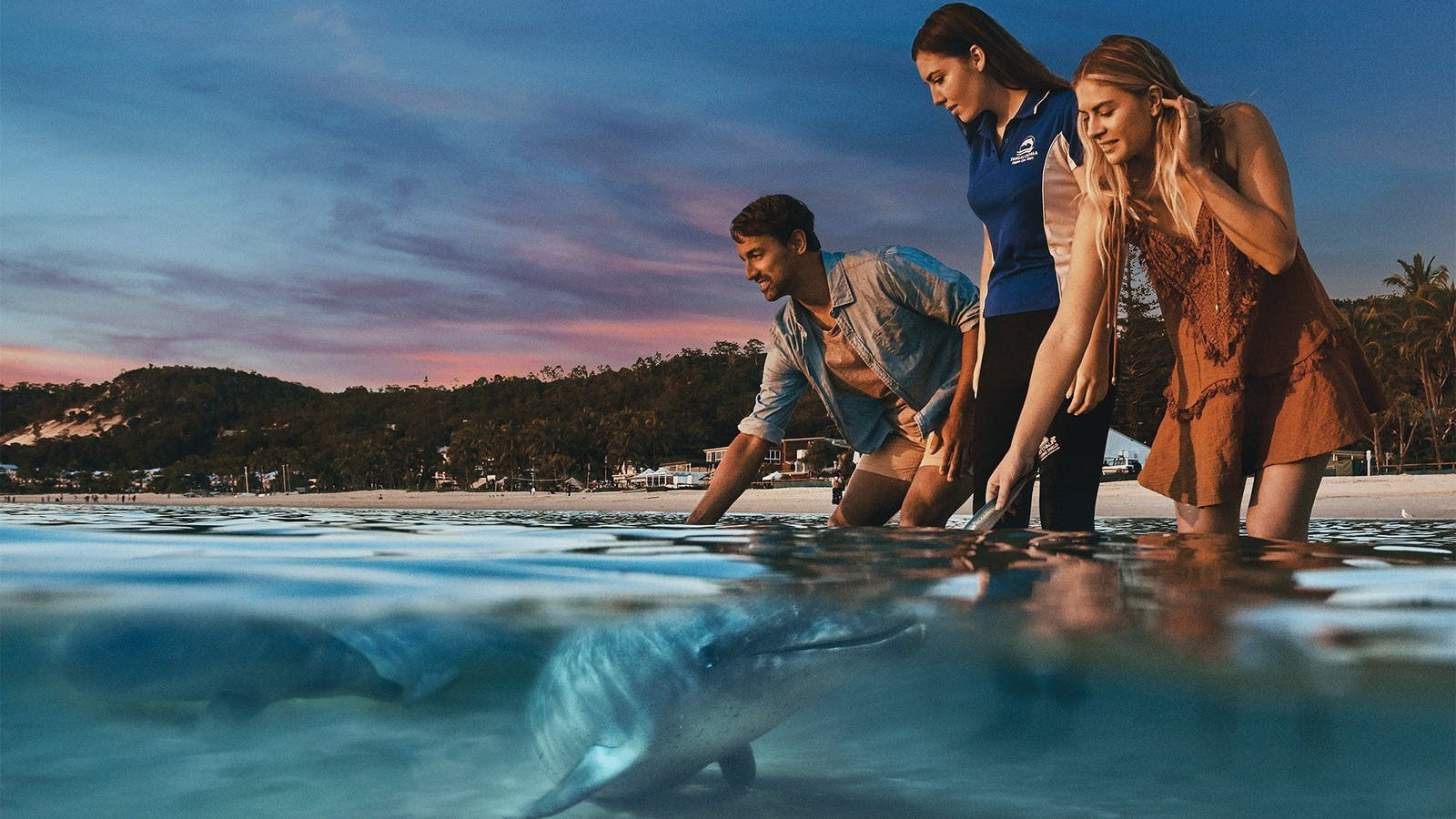 Wild Dolphin Feeding - Exclsuive to guests of Tangalooma Island Resort. Conditions apply