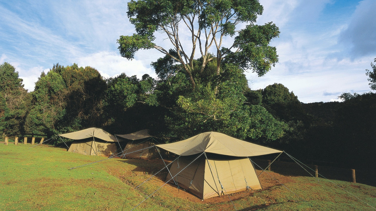 tenst in cleared camping area surrounded by rainforest.