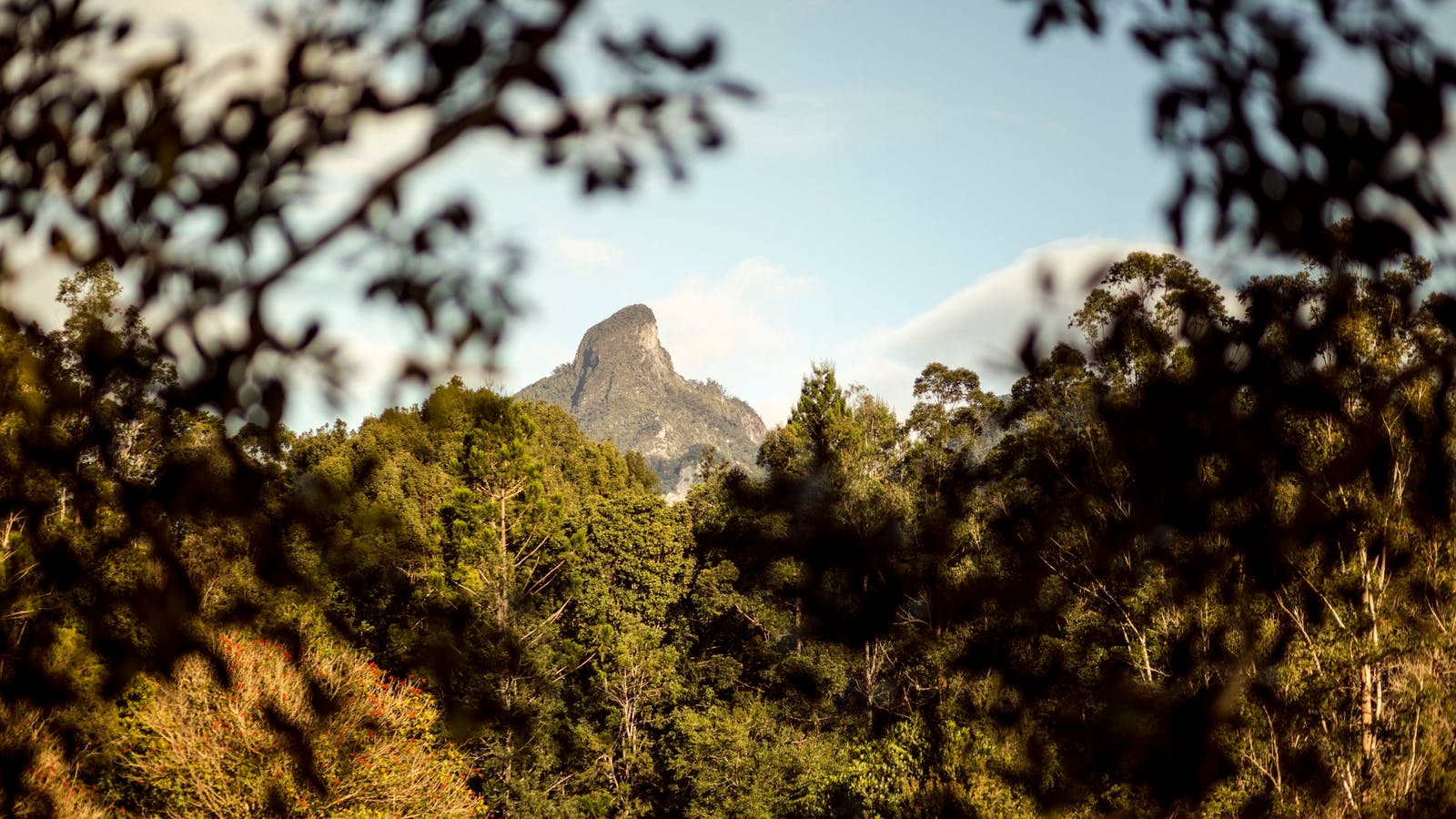Wollumbin-Mt Warning, as seen through the trees from Mavis's Kitchen and Cabins.