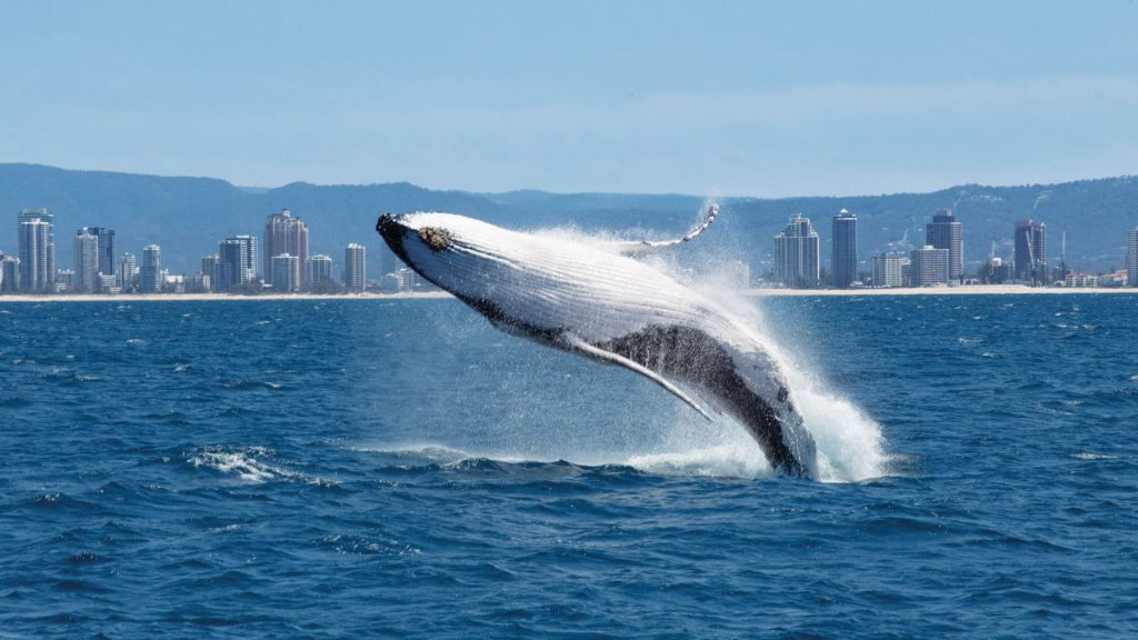 water sports whale watching