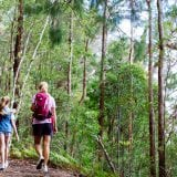 Hiking Springbrook National Park