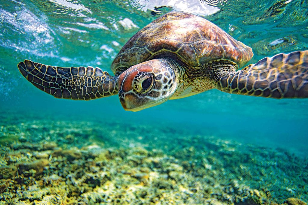 Turtle photographed by Sean Scott